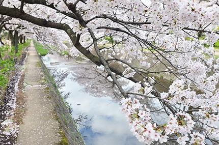 20160407_sisijyuuroku_4.jpg