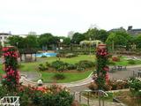 若園公園ばら園