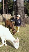 動物とふれあえる公園