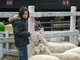 モコモコの羊と戯れる!