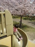 お花見も楽しめる、広々とした公園!