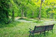 涼しさと癒しの森