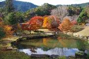 銀山湖の紅葉