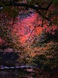 夙川......紅葉