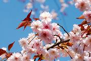 花咲くお寺へ