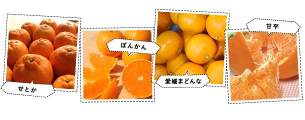 1位 柑橘類(愛媛まどんな・甘平・みかん頒布会など)